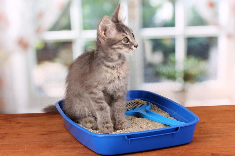 """กรมส่งเสริมการค้าฯ ชี้ """"ทรายแมว"""" ผลิตภัณฑ์เพื่อสัตว์เลี้ยงมาแรงในรัสเซีย"""