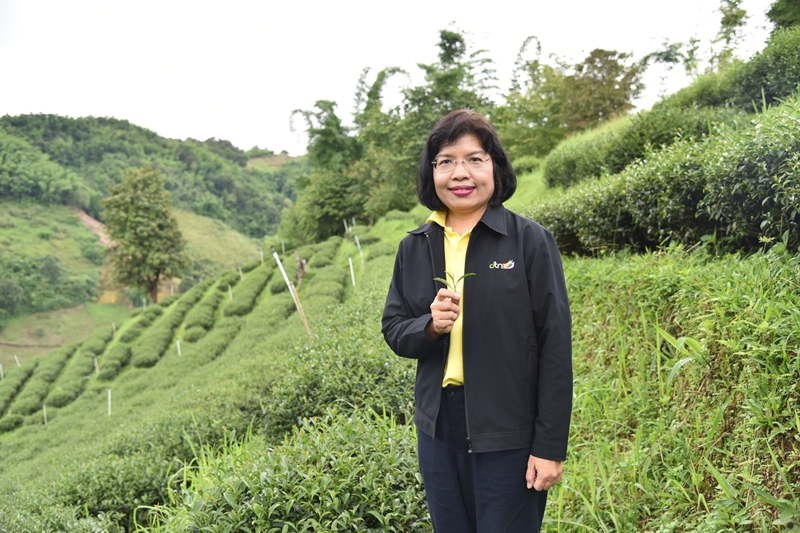 'กรมเจรจาฯ' ปลื้ม FTA ดันไทยรั้งอันดับ 4 ผู้ส่งออกผลิตภัณฑ์ชาของโลก